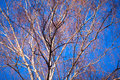 Colored pattern on blue sky in spring