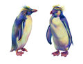 Colored pencils drawing rainbow rockhopper penguins Royalty Free Stock Photo