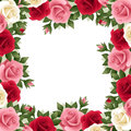 Colored roses frame with red pink and white rosebuds and leaves Stock Image