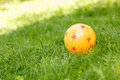 Colored rubber ball lying on grass alone yellow with stars it green Stock Images