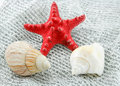 Colored Seashell on a Fishing Net Stock Images