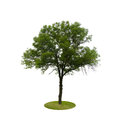 Colored Silhouette Tree Isolated on White Royalty Free Stock Photo