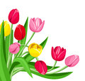 Colored tulips illustration of red pink and yellow on a white background Stock Photo