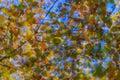 Colores abstractos Imagen de archivo libre de regalías