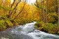 Colores del otoño del río de Oirase Imágenes de archivo libres de regalías