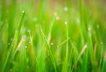 Colorful abstract photo, excellent for backgrounds and cards. grass. Royalty Free Stock Photo