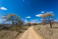 Colorful African Safari Bush Road  Royalty Free Stock Photo