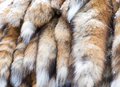 Colorful Animal Fur