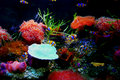 Colorful aquarium Royalty Free Stock Photo