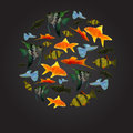 Colorful aquarium fishes isolated polygonal vector illustration Stock Photography