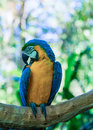 Colorful ara in iguacu brazil Royalty Free Stock Images
