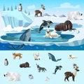 Colorful Arctic Wildlife Concept