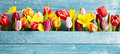 Colorful arrangement of fresh spring flowers Royalty Free Stock Photo