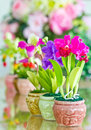 Colorful of Artificial Flower. Stock Photo