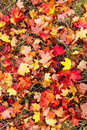 Colorful autmn leaves Stock Image
