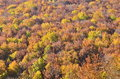 Colorful autumn canopy Royalty Free Stock Photo