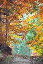Colorful Autumn Fall Leaves in forest landscape and footpath Royalty Free Stock Photo