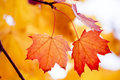 Colorful autumn foliage Stock Image