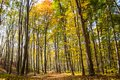 Colorful Autumn Forest Stock Images
