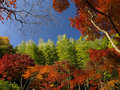 Colorful autumn in Japan Stock Photography