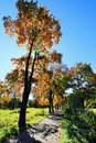 Colorful autumn landscape with blue sky Royalty Free Stock Images