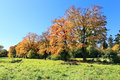 Colorful autumn landscape with blue sky Royalty Free Stock Image