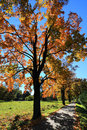 Colorful autumn landscape with blue sky and trees Stock Photography