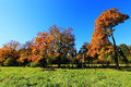 Colorful autumn landscape with blue sky and trees Stock Photos