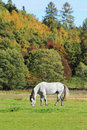 Colorful autumn landscape with horse blue sky and Stock Photography