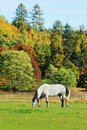 Colorful autumn landscape with horse blue sky and Royalty Free Stock Photography