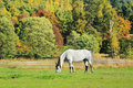 Colorful autumn landscape with horse blue sky and Stock Photo