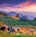 Colorful autumn landscape in mountain village sunset Royalty Free Stock Photography