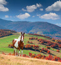 Colorful autumn landscape in mountains with horse Royalty Free Stock Photography