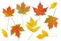 Colorful Autumn Leaf Set.