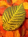 Colorful autumn leaf texture suitable as background Stock Photos