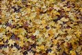 Colorful autumn leafs Royalty Free Stock Images
