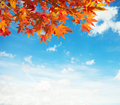 Colorful autumn leaves against blue sky Stock Photos