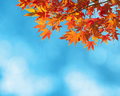 Colorful autumn leaves against blue sky Royalty Free Stock Photos