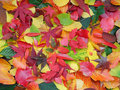 Colorful autumn leaves background Stock Image