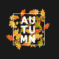 Colorful Autumn Leaves Background. Floral Banner Design Royalty Free Stock Photo