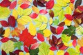 Colorful autumn leaves background top view. Bright fall patterns. Royalty Free Stock Photo