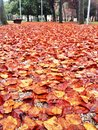 Colorful autumn leaves carpet in a park Royalty Free Stock Photo