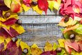 Colorful autumn leaves with chestnut on white wood background Royalty Free Stock Photo