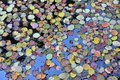Colorful autumn leaves floating on the water Royalty Free Stock Photo