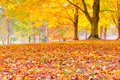 Colorful autumn leaves forest blurred background selective focus Royalty Free Stock Photography