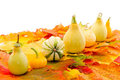 Colorful autumn leaves with Pumpkin Royalty Free Stock Photography