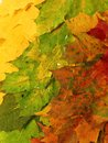 Colorful autumn leaves suitable as background Royalty Free Stock Photo
