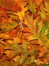 Colorful autumn leaves suitable as background Stock Image