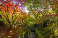 Colorful autumn leaves in Tofukuji, Kyoto Royalty Free Stock Photo