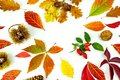Colorful autumn leaves and yields pattern isolated on white background. flat lay, overhead view